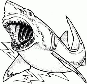 great white shark coloring lesson  kids coloring page
