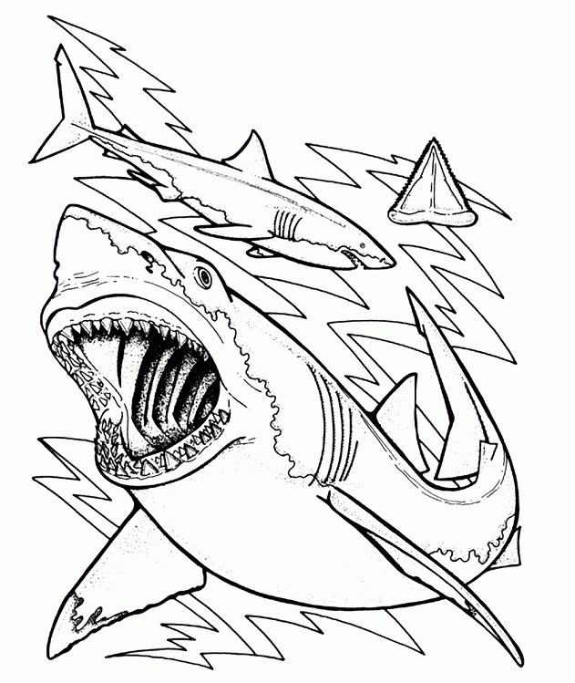 Great White Shark Coloring Lesson | Kids Coloring Page ...